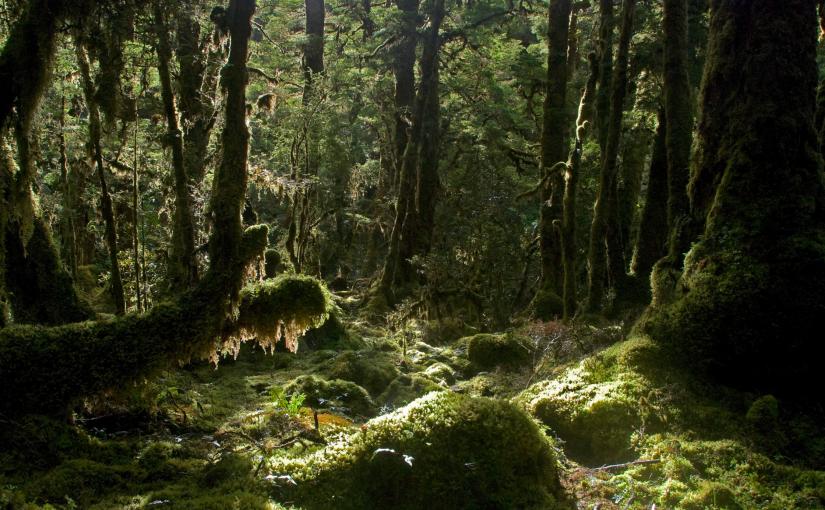Moss Games in the IrisBurn